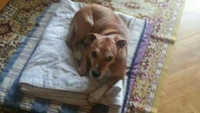Excálibur, el perro de Teresa Romero, única infectada por ébola en España, fue sacrificado.