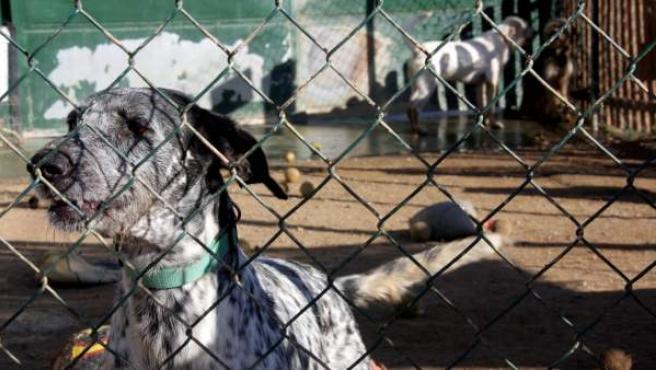 Varios perros abandonados en una protectora de animales.