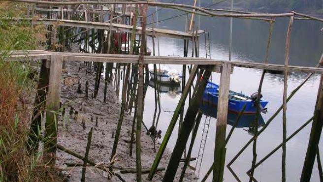 Pesca de angula