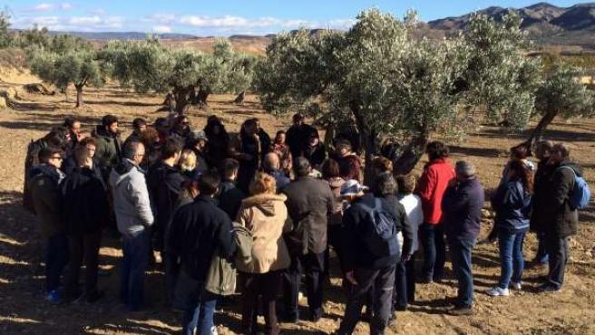 Voluntarios de Telefónica visitan el olivar de Oliete (Teruel)