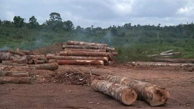 La deforestación de la selva amazónica en una imagen.