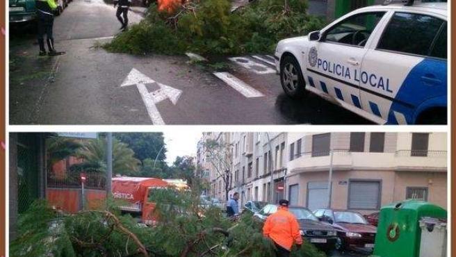 Caída de árbol en la calle San Sebastián