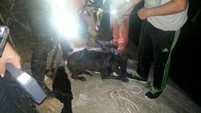 Perro rescatado en l'Eliana