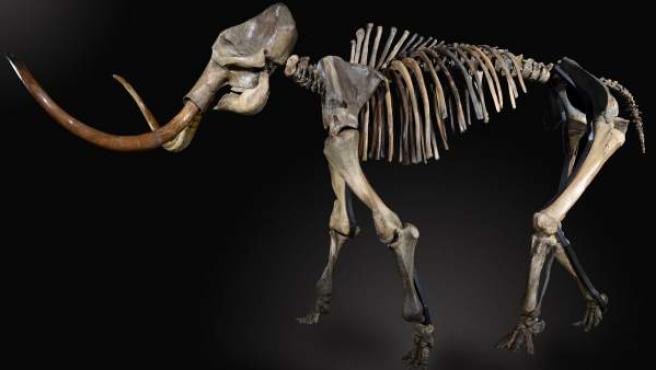 Esqueleto de mamut lanudo vendido en la subasta 'Second Evolution' en Reino Unido