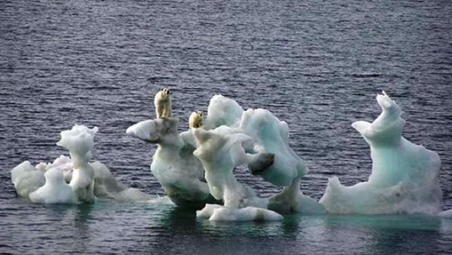 Osos polares en un iceberg en deshielo debido al cambio climático.