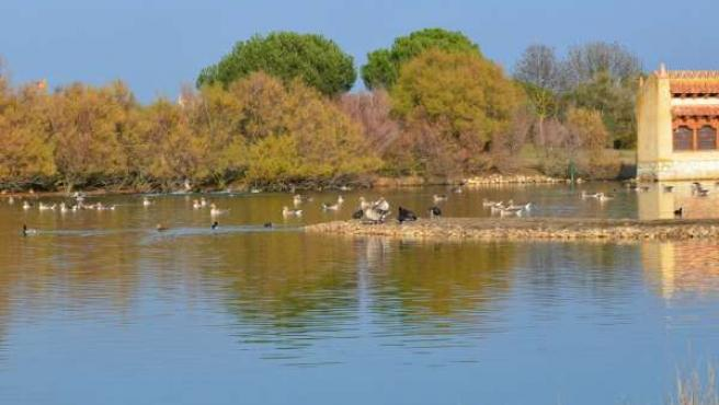 Las lagunas de Villafáfila, en la provincia de Zamora.