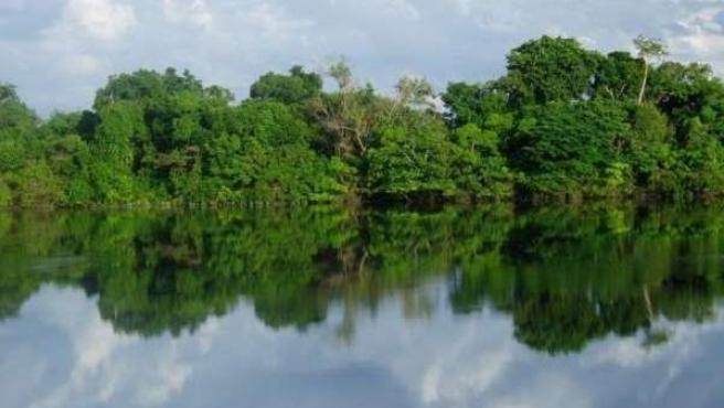 Bosque Tropical En Manaos (Brasil)