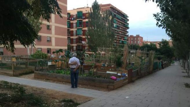 Un jubilado contempla los huertos de la calle Maladeta, en el barrio de Porta de Barcelona, que una veintena de personas cultivan en una parcela propiedad de Núñez y Navarro.