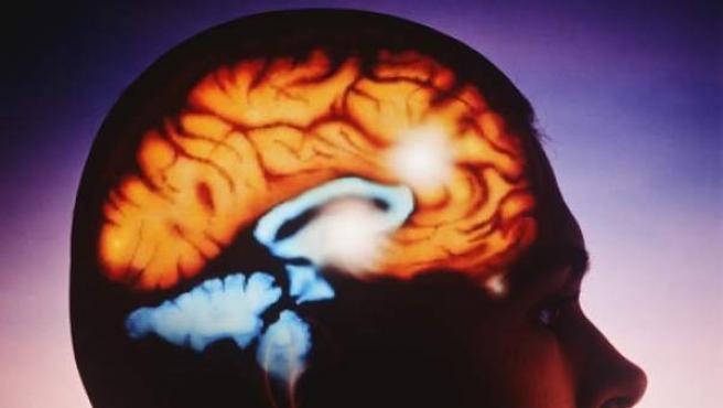 Recreación del cerebro humano.