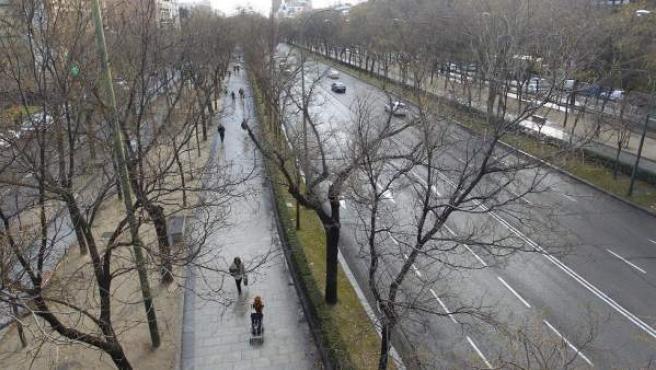 Los árboles del tramo del Paseo de la Castellana desde la calle María de Molina hasta las Cuatro Torres serán objeto de estudio.