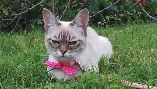 Sauerkraut, el rival de Grumpy Cat arrasa en Instagram.