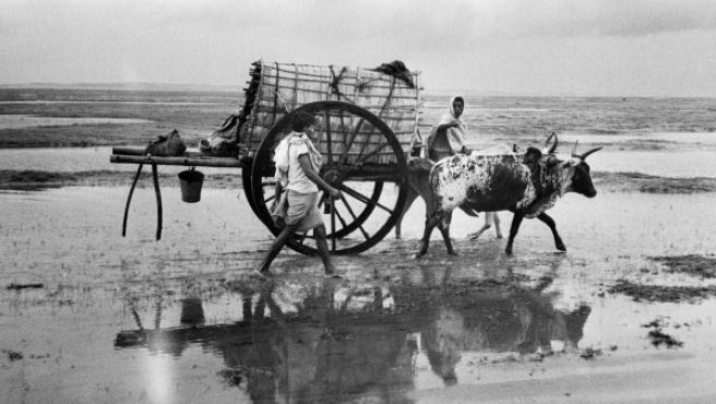 Un carro tirado por bueyes en la India. Foto de Marc Riboud tomada en 1956