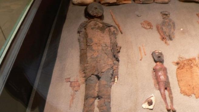 Imagen de varias momias Chinchorro en el Museo de San Miguel de Azapa, Arica (Chile).