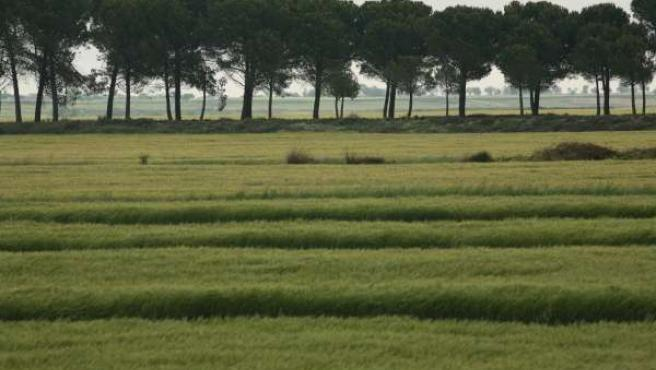 Campos de cultivo