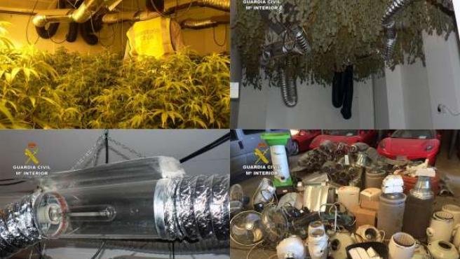 Desmantela una sofisticada plantación de marihuana