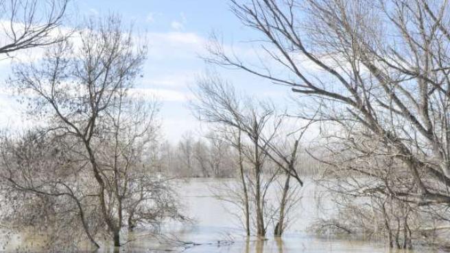 El Ebro se desbordó en Pradilla y otros municipios.