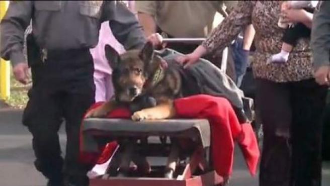 Zeus, el perro policía homenajeado antes de su sacrificio, en el desfile celebrado en su honor.