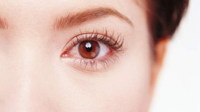 El ojo es a menudo un buen modelo para entender el funcionamiento del cerebro.