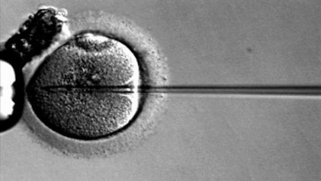 Fertilización de óvulos.