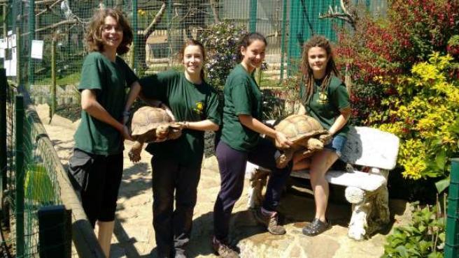 Operarias del Zoo muestran a las tortugas africanas.