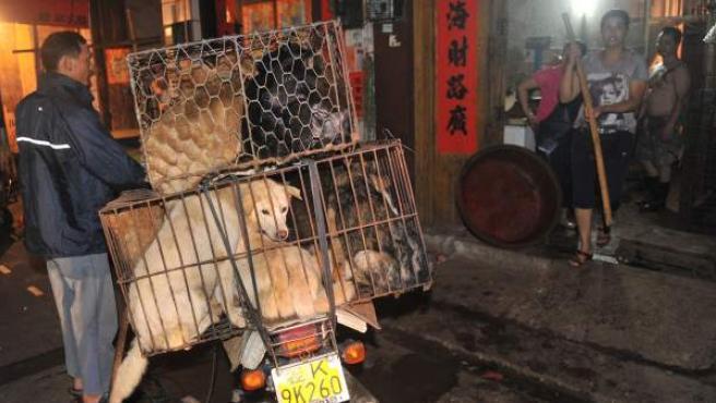 Un grupo de perros, antes de ser vendidos para ser comidos en Yulin, China.