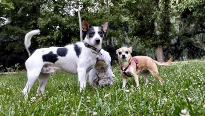 Tres perros jugando en el parque.
