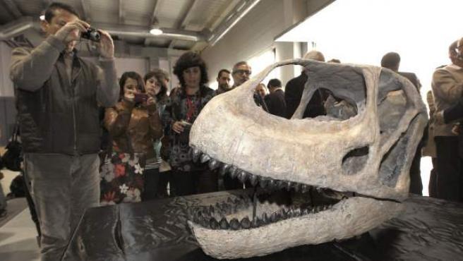 El Dinosaurio Más Grande De Europa Sale Por Primera Vez De España Y Viaja A Japón