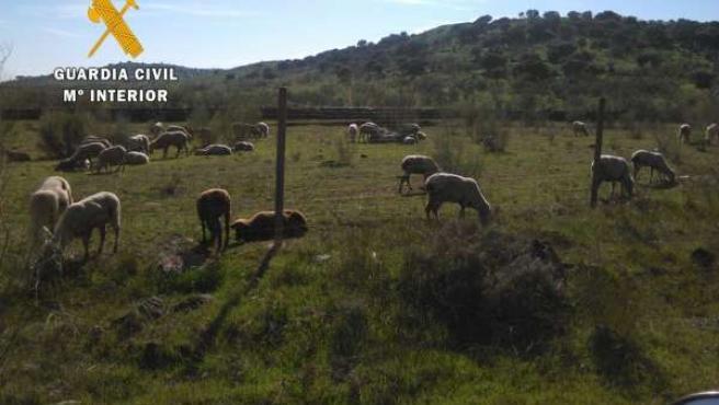 Terrenos utilizados por el ganadero
