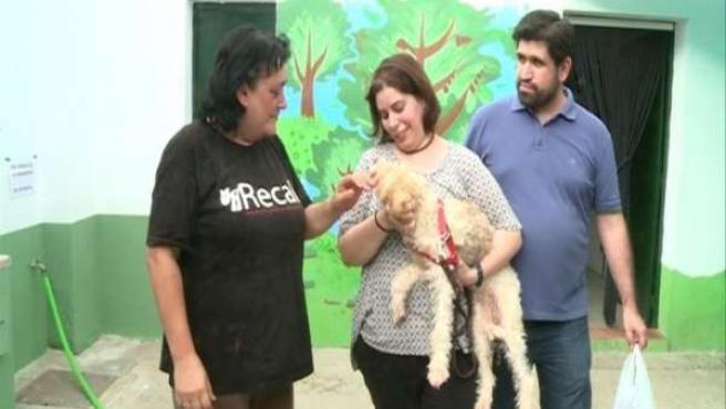 Un perro adoptado en la perrera de Almendralejo