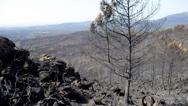 Los efectos devastadores del incendio de Sierra de Gata entre las poblaciones de Hoyos y Acebo.