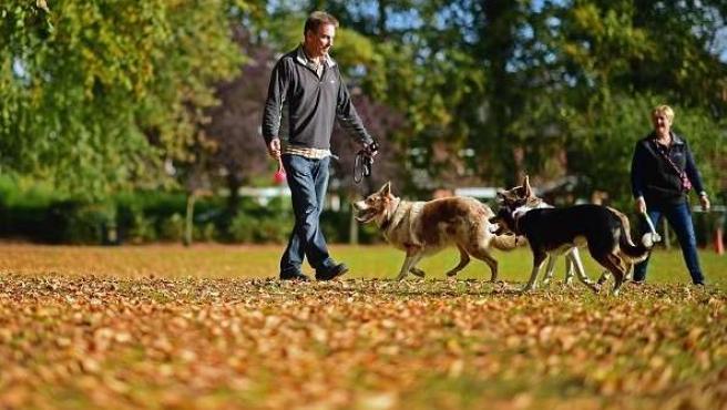 Pareja paseando perros en el parque
