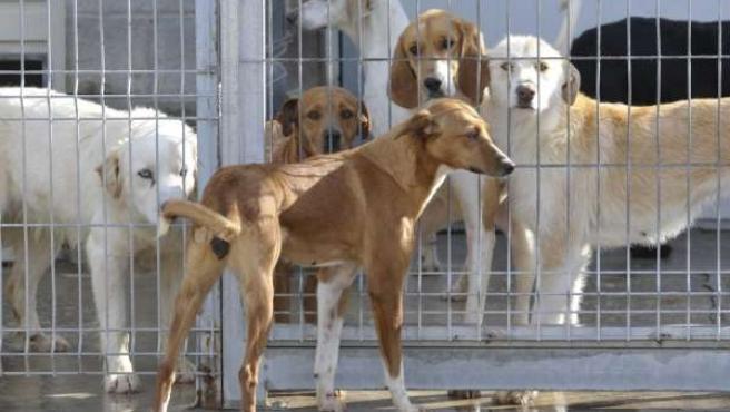 Perros en el Centro de Protección Animal de la DPH