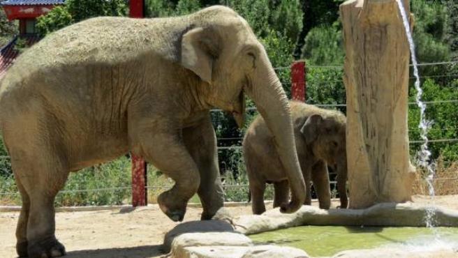 Los elefantes Buba y Jangoli se trasladarán al parque de Selwo Aventura en Estepona (Málaga)