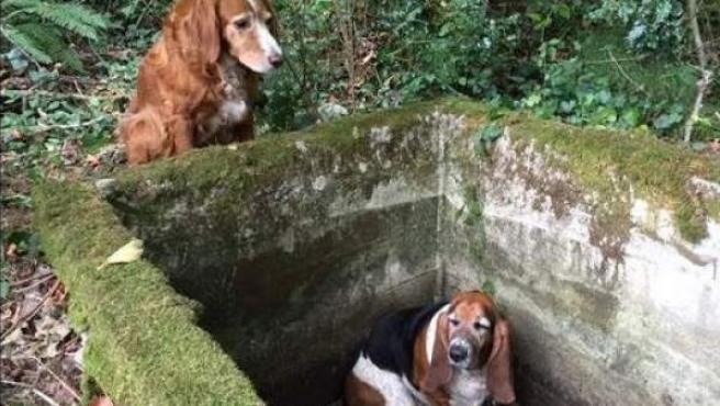 Tillie es un perro que se mantuvo una semana junto a su compañera Phoebe, que quedó atrapada en un depósito
