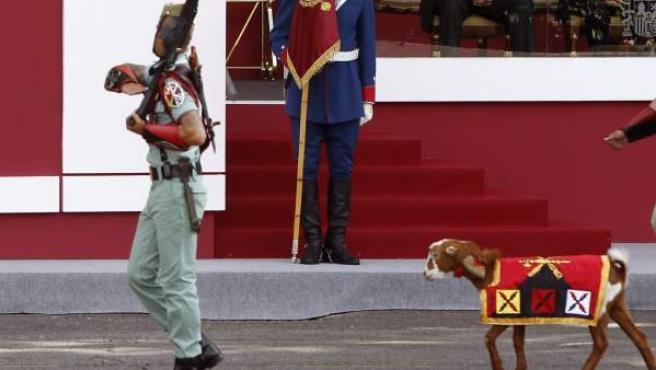 Momento en el que la cabra de la Legión, de nombre Pablo, desfila ante la tribuna de autoridades durante el desfile de la Fiesta Nacional de 2015.