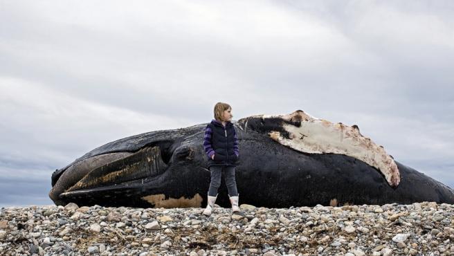 Clover ante el cadáver de una ballena