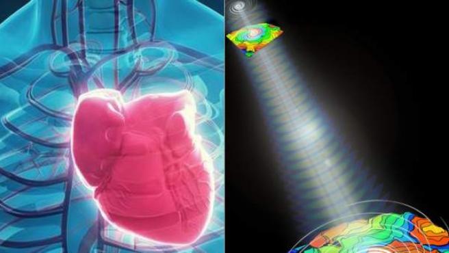 La optogenética hasta ahora se ha utilizado principalmente en la ciencia del cerebro.