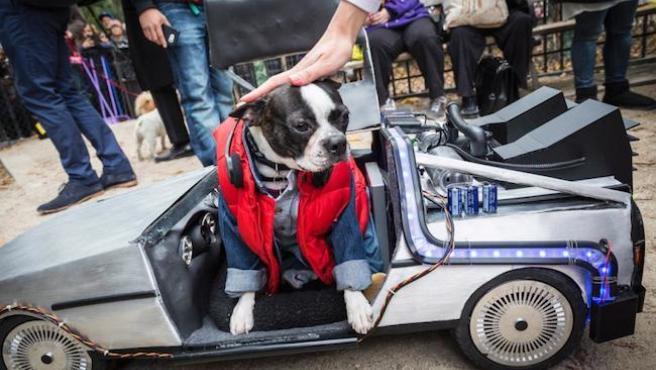 Galería: desfile de perros cinéfilos en Halloween