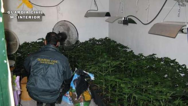 Plantación de droga en la provincia de Córdoba
