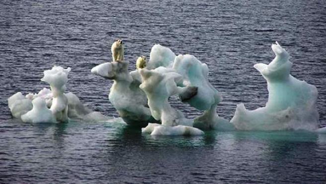 Las morsas y osos polares están iniciando en verano una marcha desesperada hacia el sur, un rebaño errante y confuso.
