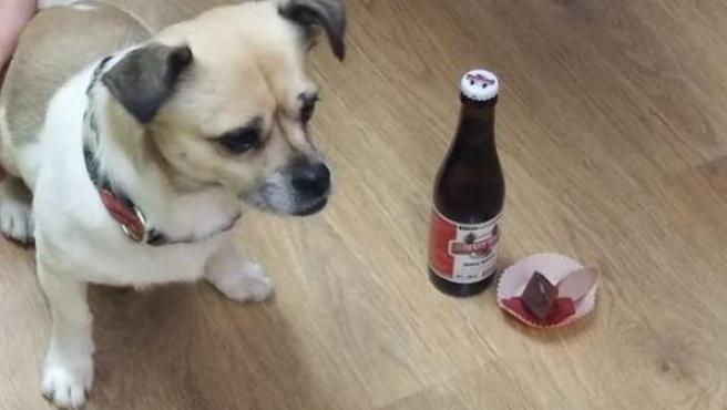 Un perro en el bar Belfos y Trufas con una 'cerveza' y un pintxo.