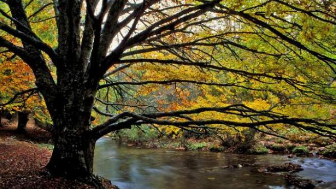 El hayedo de Montejo es un bosque de hayas de 250 hectáreas en las faldas de la Sierra de Ayllón, en la Comunidad de Madrid.