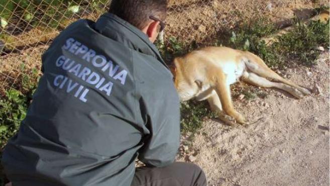 Seprona Guardia Civil, maltrato animal