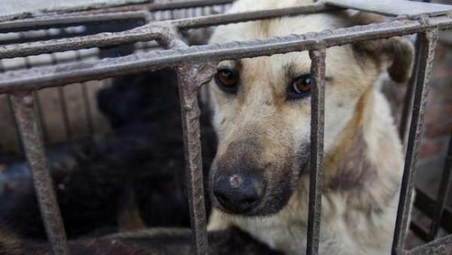 Perro, jaula, cárcel, animal, triste