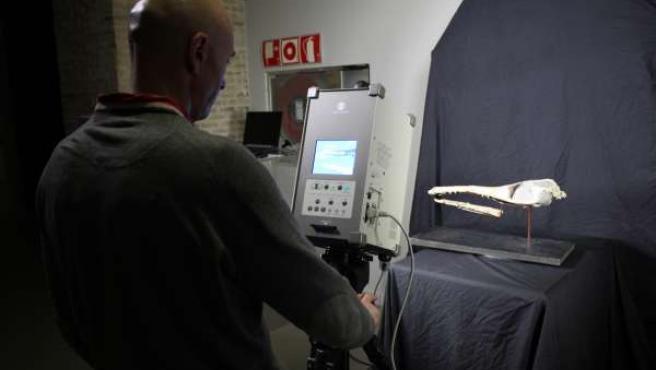 Escaneo del cocodrilo de Ricla
