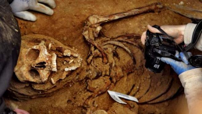 Los arqueólogos en los trabajos de exhumación de la fosa 2 del cementerio de Guadalajara, la de Timoteo Mendieta.