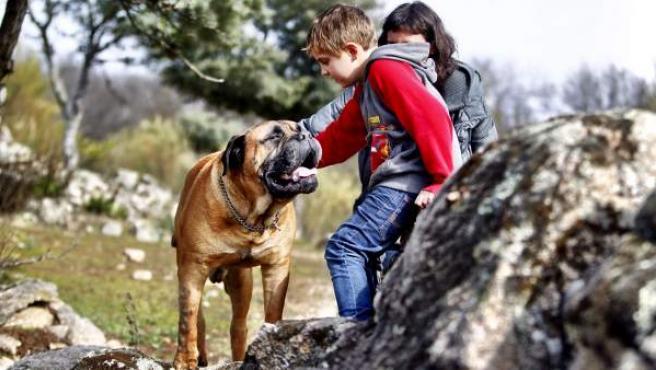 Nano es hermano de Troylo, el perro que interpretó a Truman en la película homónima de Cesc Gay triunfadora en los Goya y que también era un perro de terapia para niños con autismo. Troylo murió en noviembre, perdiendo el privilegio de ser el primer perro en pisar la alfombra roja del festival de cine de San Sebastián, honor que le correspondió a su hija Bert.