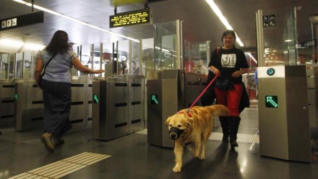 Un golden retriever accede junto a su dueña al metro de Barcelona, que desde otoño de 2014 permite la presencia de estos animales.