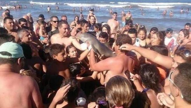 Imagen tomada en la playa argentina de Santa Teresita que se viralizó, y en la que se ve a un delfín rodeado de bañistas.