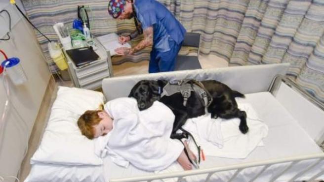 James Isaac en el hospital de Wellington Hospital con su perro de asistencia Mahe, un labrador del que nunca se separa.